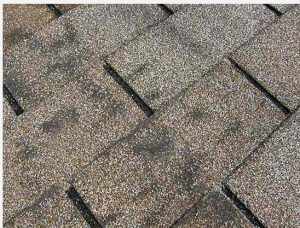 image shows old roof shingles that need replacement by Patriots Roofing